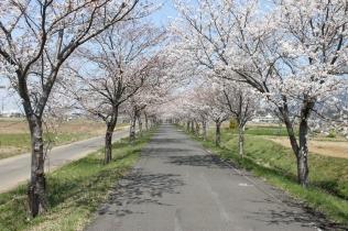 The Rinrin Road