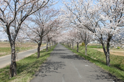 The Rinrin Road