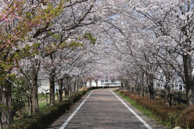 Rinrin Road