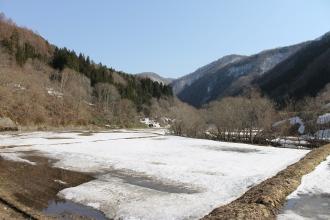 Frozen rice paddies - Ōuchi-juku