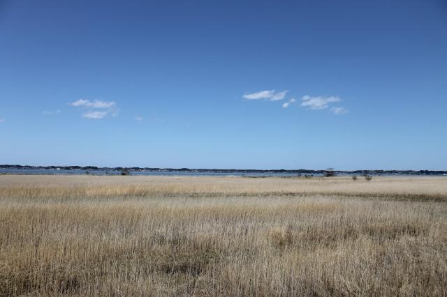 Lake Kasumigaura Marsh